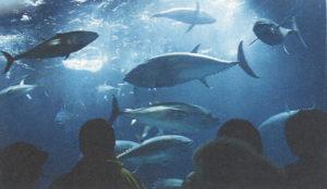 臨海公園内の水族園